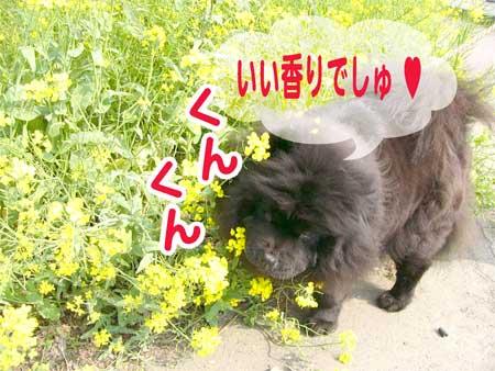 08_04_29g.jpg