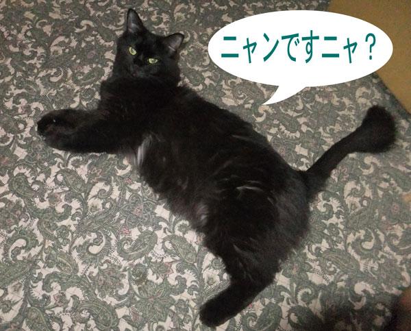 11_08_19a.jpg